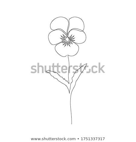 Linear estilo flor violeta ícone pote Foto stock © Olena