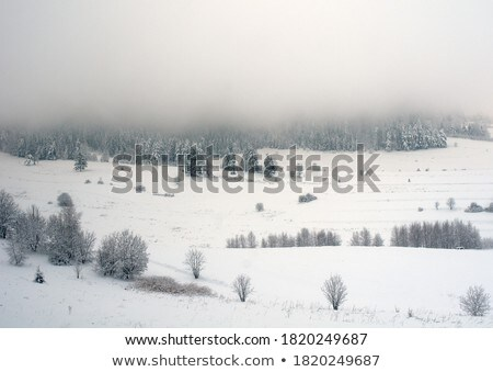 Stock photo: Panoramic view of the pine forest and a small village against the sky on a sunny day. Aerial view fr