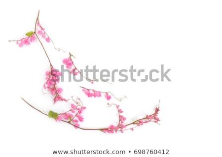 Ramo branco isolado flor folha Foto stock © Lana_M