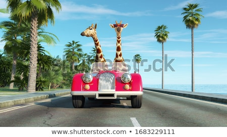 Giraffe by car on highway Stock photo © orla