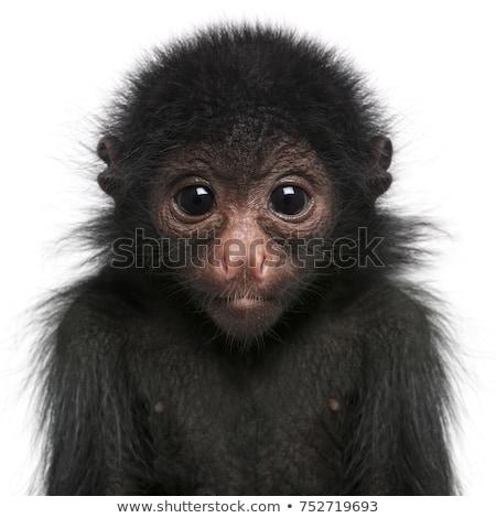 karikatür · sevimli · goril · yüz · dostça · maymun - stok fotoğraf © bluering