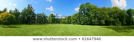 ławce · lata · lasu · drzewo · słońce - zdjęcia stock © amok