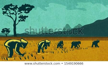南 アジア 農家 コメ レトロな ストックフォト © patrimonio