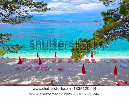 のどかな 松 木 ビーチ 表示 ストックフォト © xbrchx
