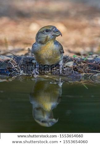 hey hydrate stock photo © lithian