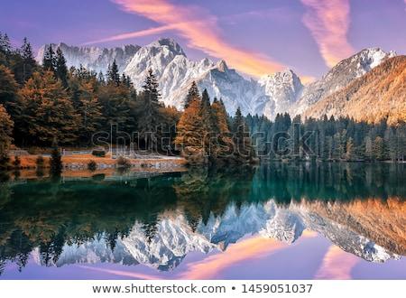 Orman sahne ağaçlar gölet örnek çim Stok fotoğraf © colematt