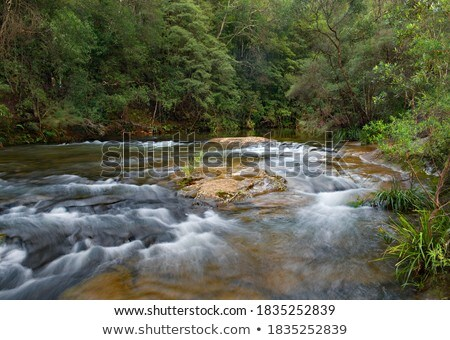cascading waterfall in beautiful australian bushland stock photo © lovleah