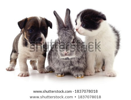 group of funny dogs waching in studio Stock photo © vauvau