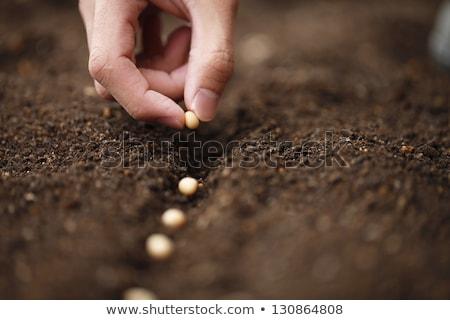 Man in garden preparing to plant Stock photo © IS2