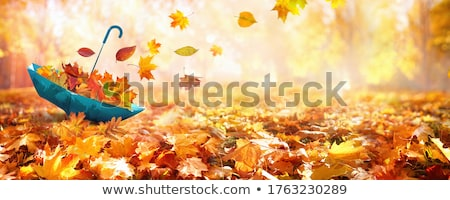 autumn leaves and umbrellas colorful seasonal background photo stock © margolana