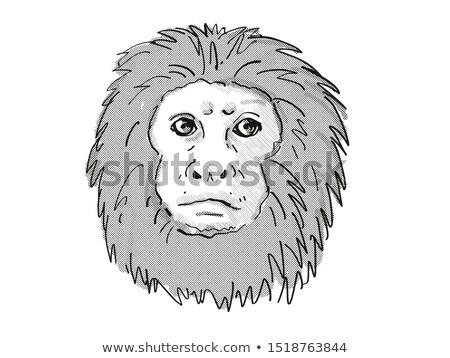 Golden Lion Tamarin Monkey Cartoon Retro Drawing Stock photo © patrimonio