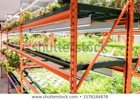 Półki zielone sadzonki różny rolniczy roślin Zdjęcia stock © pressmaster