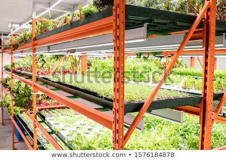 Groene zaailingen agrarisch planten Stockfoto © pressmaster