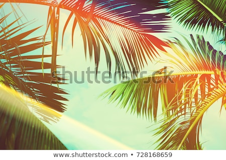 Banner of Tropical Background Palm Trees Branches. Holiday. Travel. Stock photo © Illia