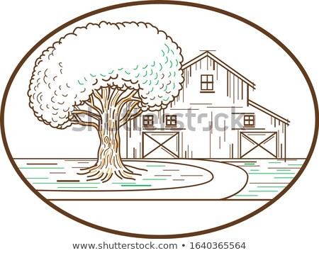Americano celeiro carvalho linha oval ilustração Foto stock © patrimonio