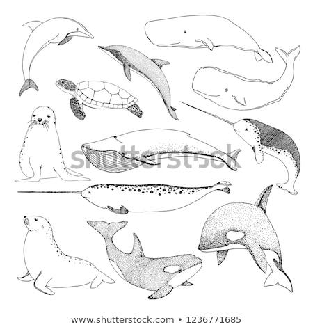 Boceto mar criaturas tortuga ballena Foto stock © Arkadivna