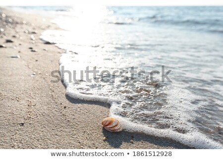 Conch Shell on a Wet Sandy Beach Stock photo © Frankljr