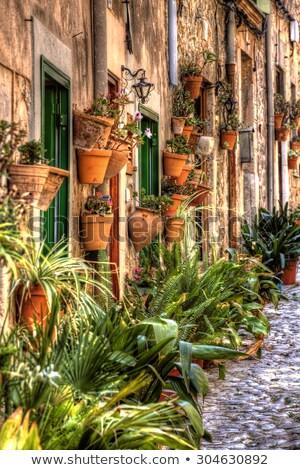 plants pots in valldemossa at majorca balearic island stock photo © lunamarina