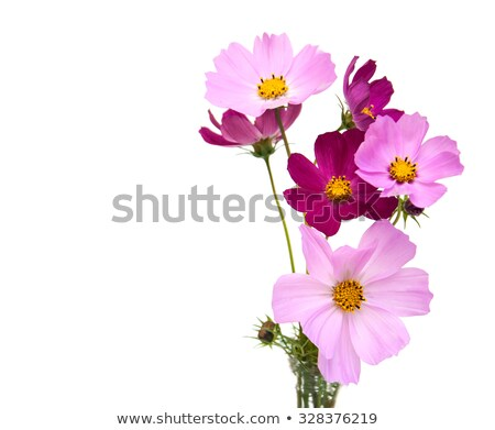Pink And White Daisies Foto d'archivio © Es75
