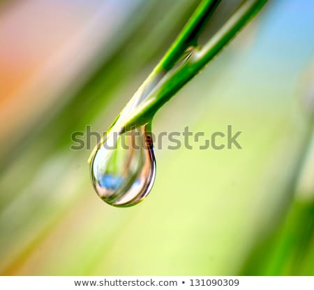 droplet on blade of grass Stock photo © smithore