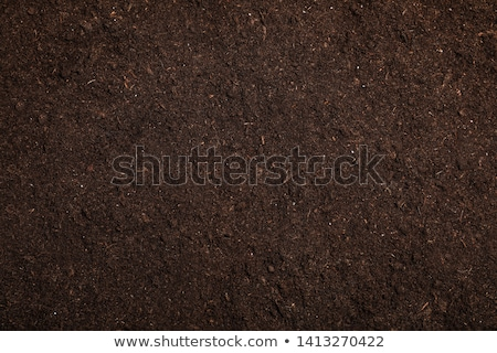 Cultivated soil Stock photo © vaximilian