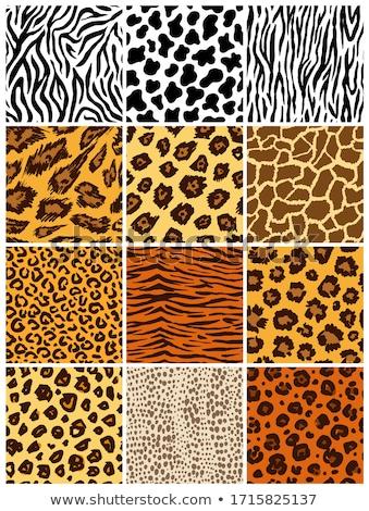 Stok fotoğraf: Vector Animal Skin Textures Of Giraffe