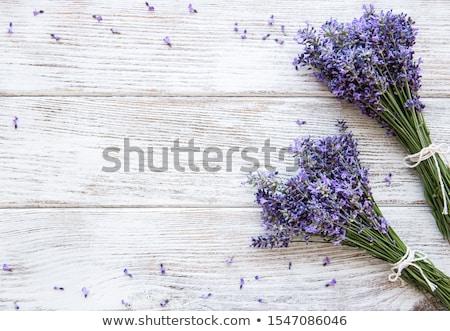Fresh Lavender Flowers Border Stock fotó © almaje