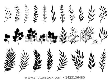 Silhueta desfolhada planta branco foco madeira Foto stock © sirylok
