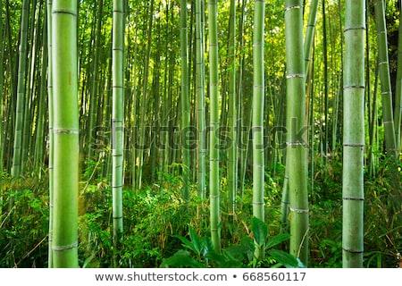 Bambusz erdő fa természet levél háttér Stock fotó © dagadu