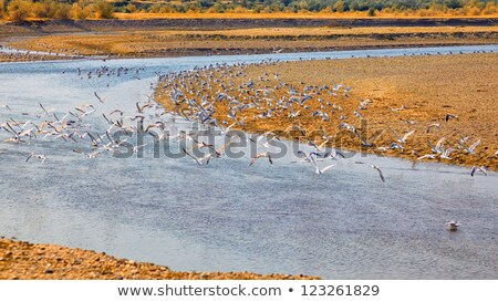 Чайки берег реки летнее время Румыния пейзаж красоту Сток-фото © igabriela