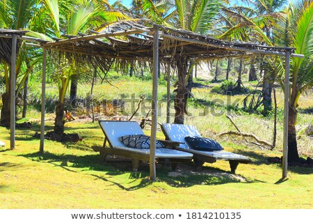tropical beach with trees and two blue chairs on the grass stock photo © iriana88w