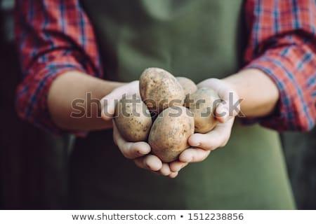 ジャガイモ · 手 · 男 · 地球 · 食品 - ストックフォト © stevanovicigor