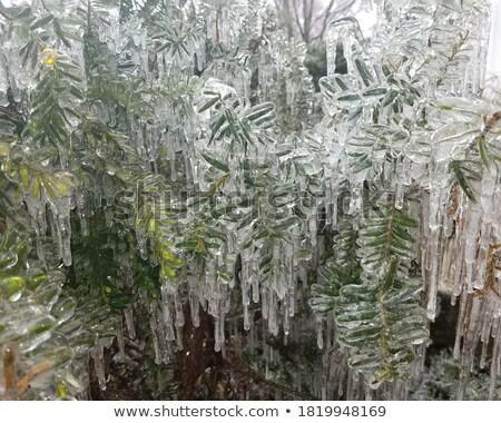 ストックフォト: 氷 · 茂み · 冬