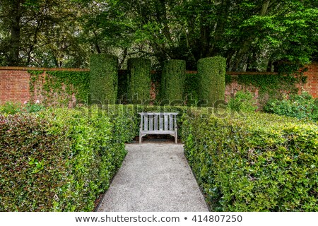 Garden bench surrounded by lush summer vegetation Stock photo © Zhukow