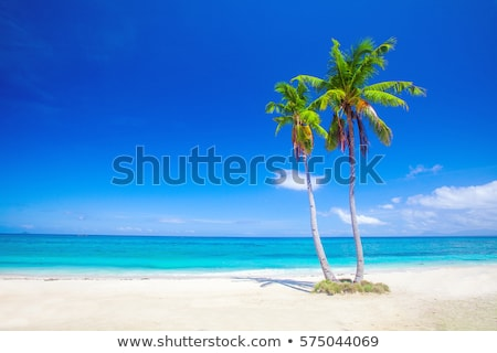 buildings on a tropical beach stock photo © zzve