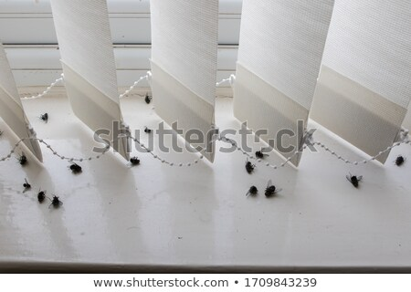 Insecticide spray bottle with dead fly Stock photo © Anterovium