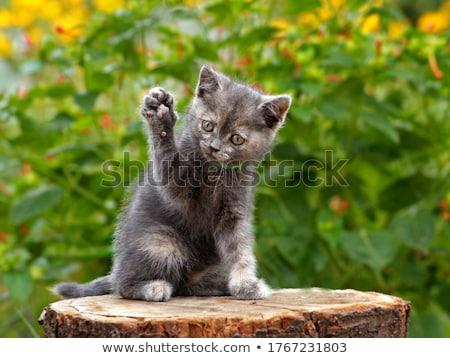 небольшой · котенка · саду · Cute · кошки · дома - Сток-фото © meinzahn