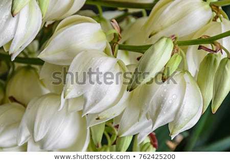 Roślin kwiaty pustyni wiosną charakter Zdjęcia stock © emattil