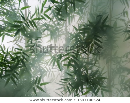 Green frosted glass background, texture with backlight Stock photo © photocreo