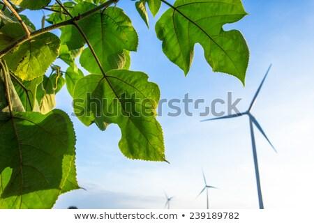 szélfarm · vidéki · terep · felhős · kék · ég · égbolt - stock fotó © tarczas