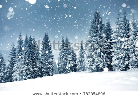 Stock photo: Snowy winter forest background