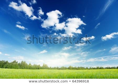 gabonapehely · nap · alacsony · kilátás · növekvő · felfelé - stock fotó © photooiasson