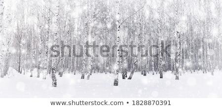huş · ağacı · kapalı · ağaçlar · kış · manzara · gökyüzü - stok fotoğraf © cosma