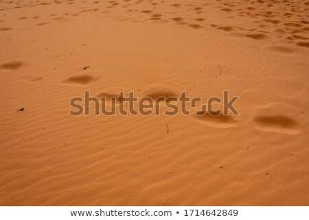 Coral Pink Sand Dunes State Park surface background Stock photo © PixelsAway