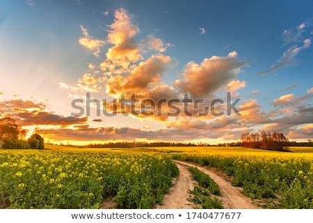 tájkép · földút · vidék · ősz · felhők · háttér - stock fotó © fesus