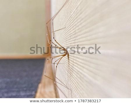 Pók zöld levél állat rovar kint közelkép Stock fotó © brm1949