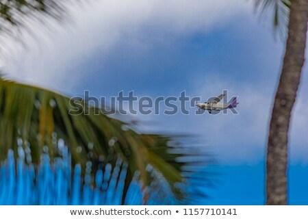 самолет Flying прошлое тропические пальмами Palm Сток-фото © chris2766