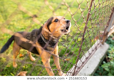 Cute guard dog behind fence, barking, checking you out Stock photo © lightpoet