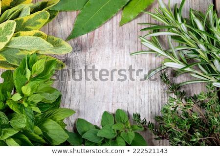 Friss kert zsálya gyógynövény izolált fehér Stock fotó © karandaev