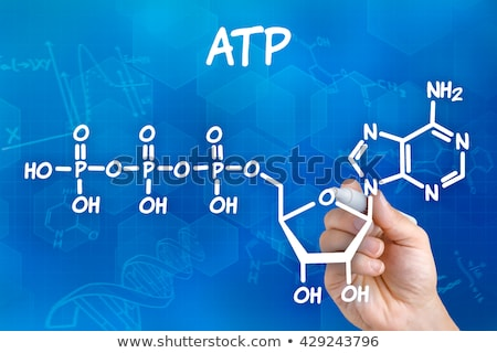 Hand with pen drawing the chemical formula of ATP Stock photo © Zerbor